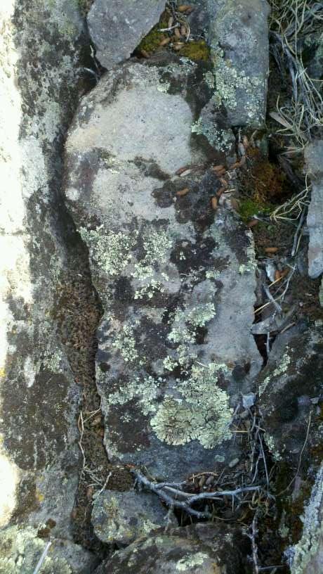 footprint 023.jpg