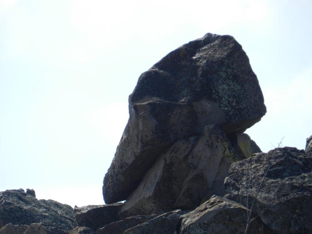 condor skull bb.jpg