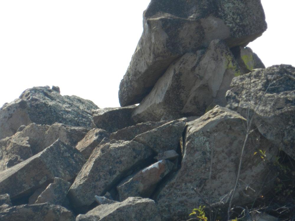 condor skull b.jpg
