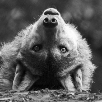 wolfffww.jpg