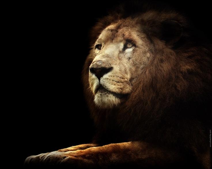 lion kind.jpg