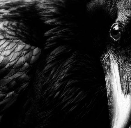 raven thehe.jpg
