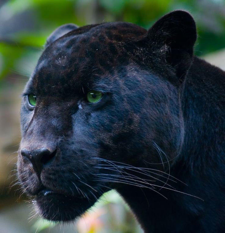 lion withshos.jpg