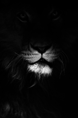 lion whwhhhh.png