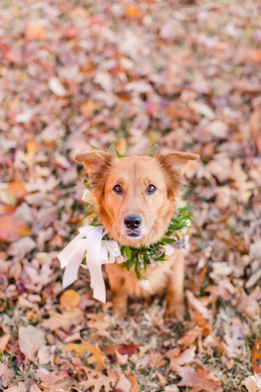 PuppyStyledShoot-1414.jpg