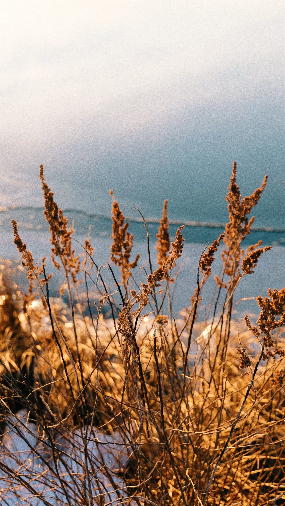 golden-hour-at-the-lake-grass.JPG