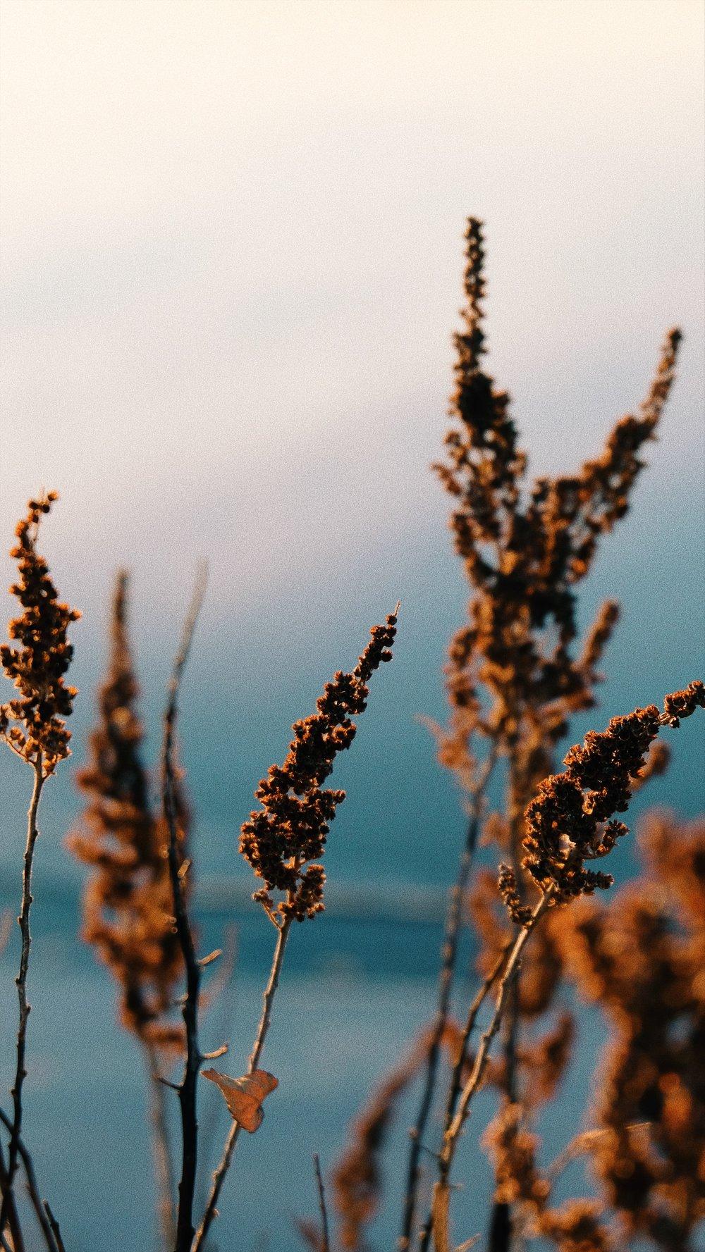 golden-hour-at-lake-grass