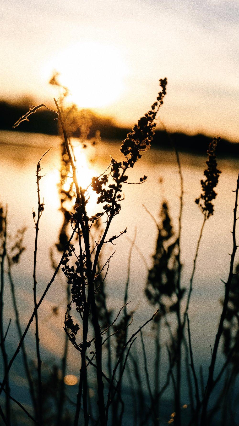 golden-hour-sun-lake-grass.JPG