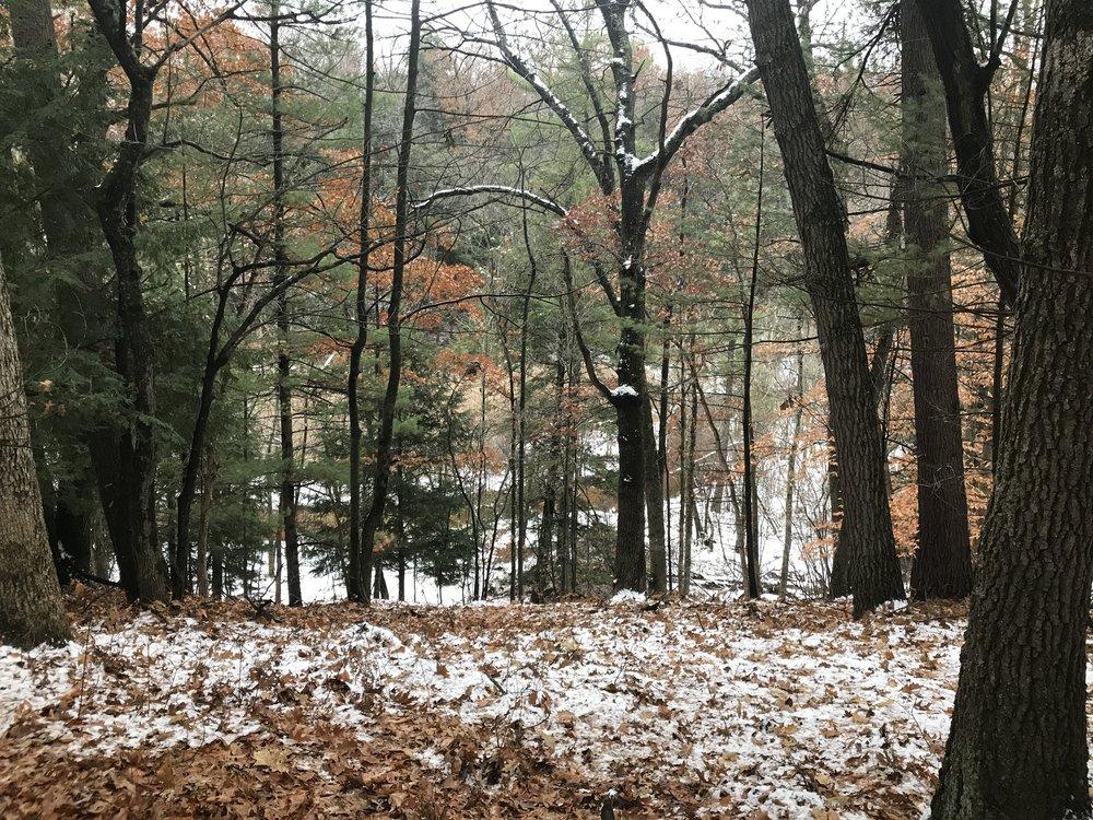 Overlook of Mosquito Creek