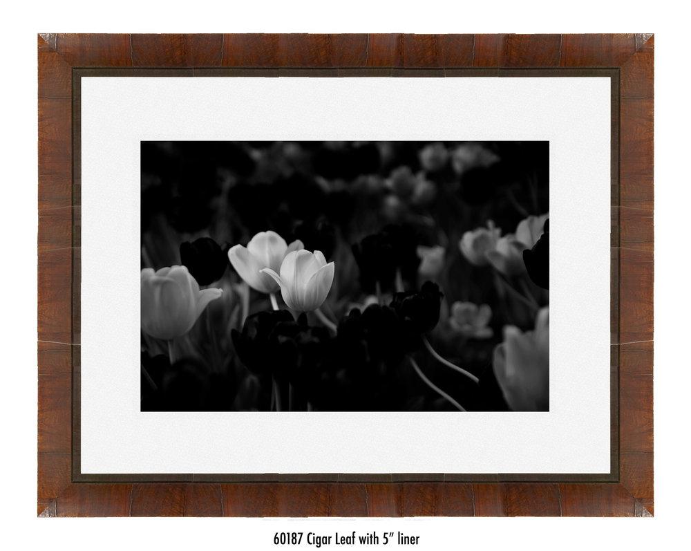 White-Flower-60187-5-wht.jpg