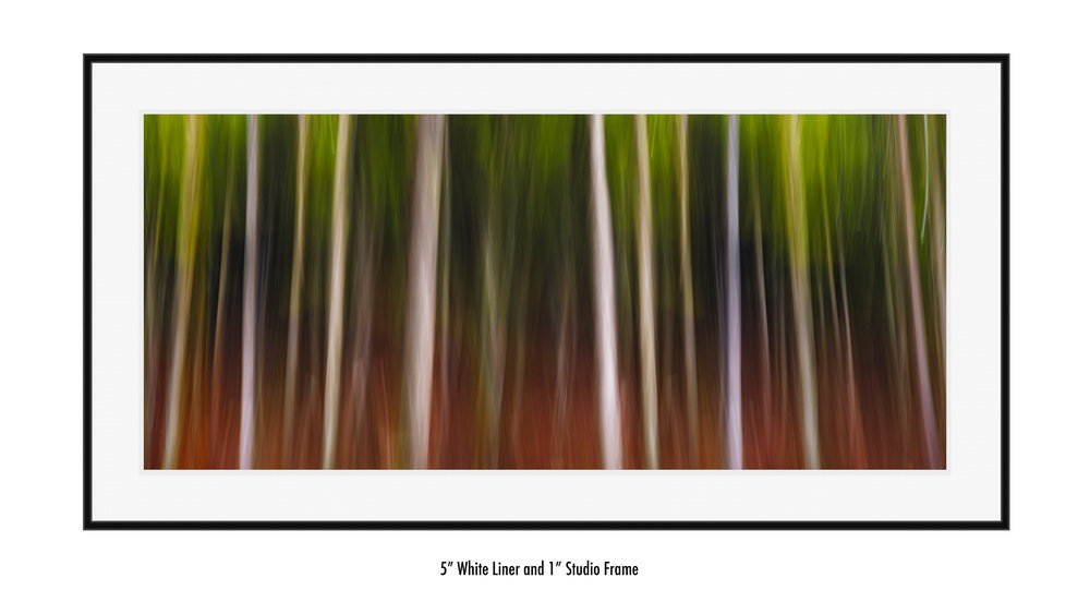 Italian-Wild-5inch-liner-wht-blk-frame.jpg