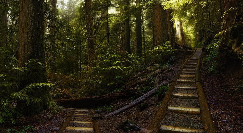 Two trails diverge through thick forest in the North Cascades, Washington. Fog effuses the scene as is characteristic of the Pacific Northwest.