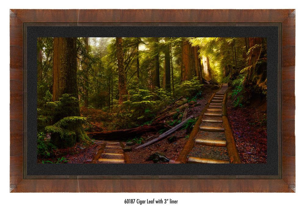 Pathways-60187-blk.jpg