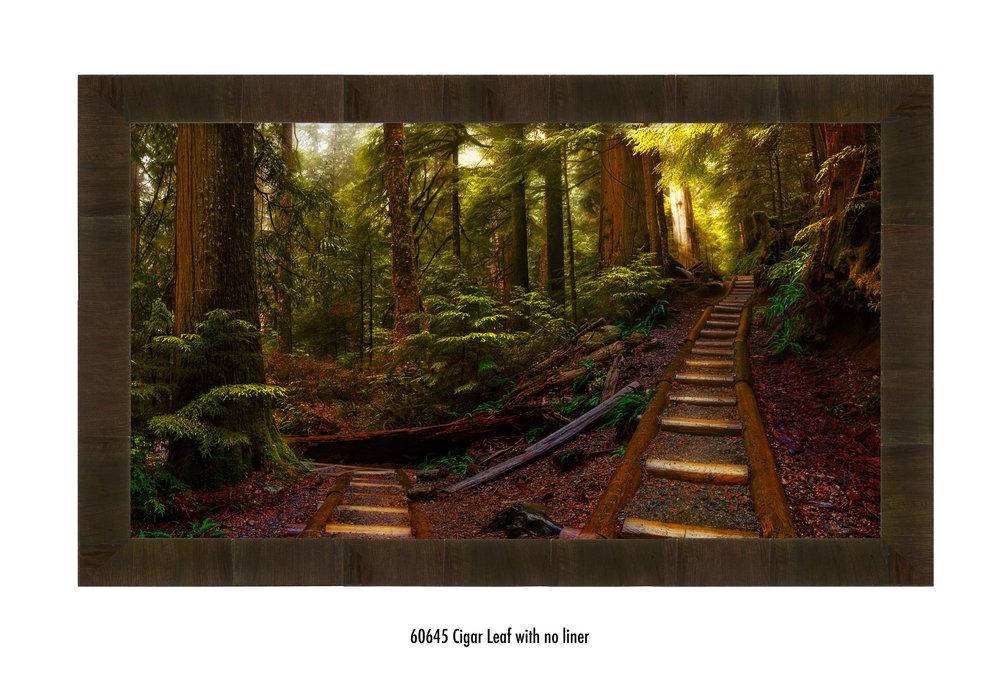 Pathways-60645-none.jpg