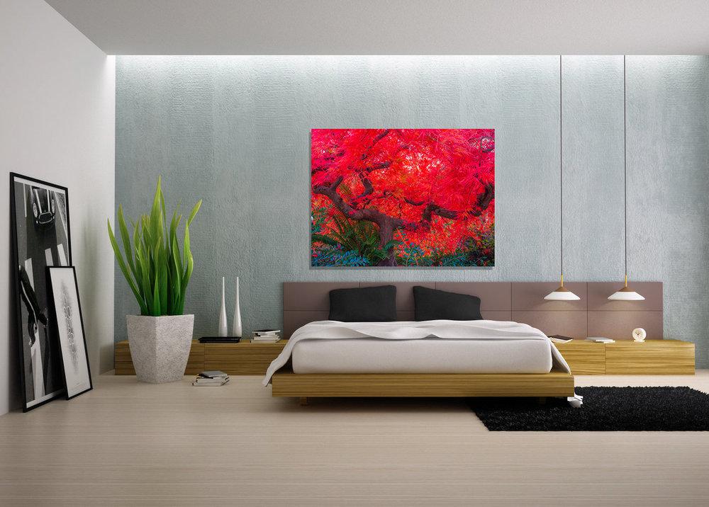 Scarlet-Tree-in-home-II.jpg