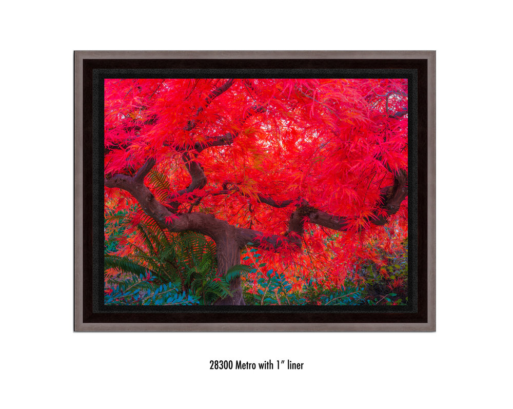 Scarlet-Tree-28300-1-blk.jpg