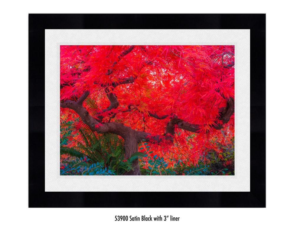 Scarlet-Tree-59300-3-wht.jpg