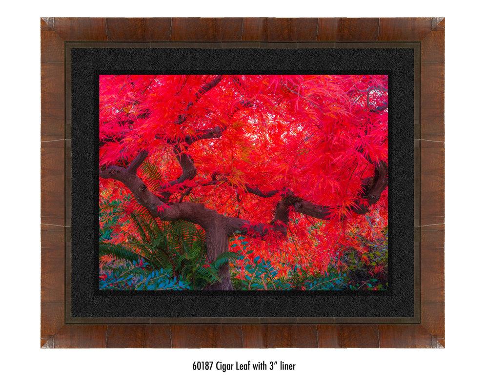 Scarlet-Tree-60187-3-blk.jpg