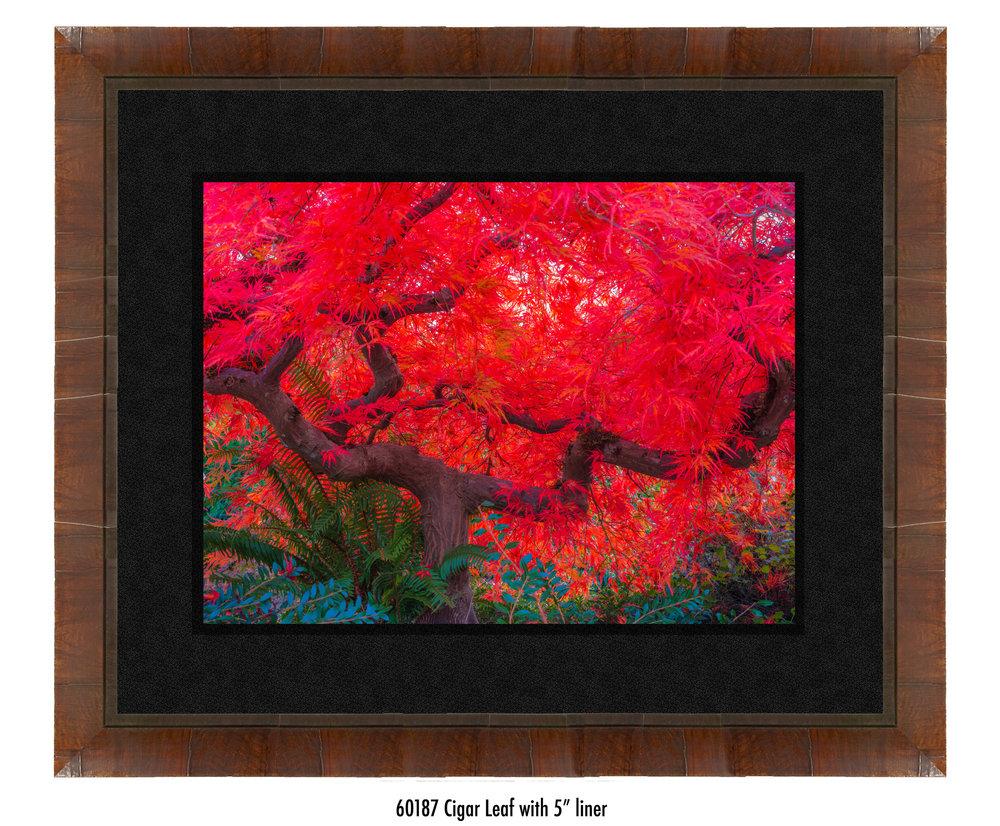 Scarlet-Tree-60187-5-blk.jpg