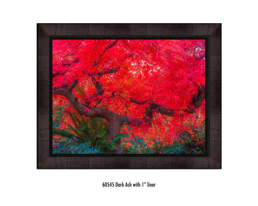 Scarlet-Tree-60545-1-blk.jpg