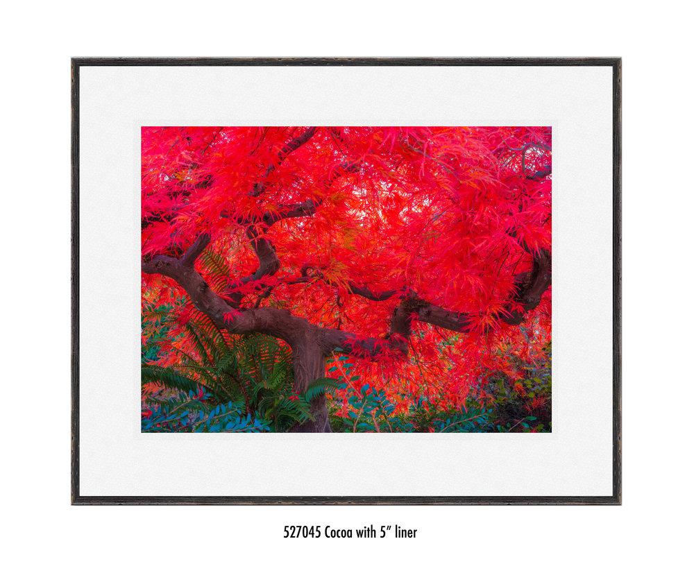 Scarlet-Tree-527045-5-wht.jpg