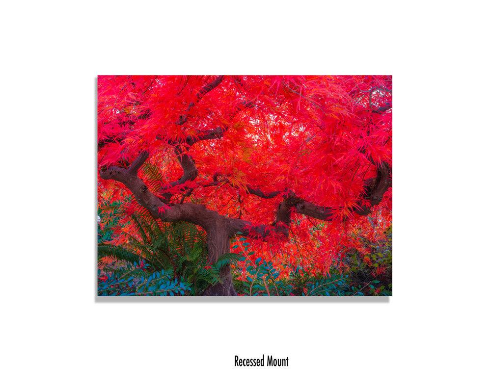 Scarlet-Tree-recessed-mount.jpg