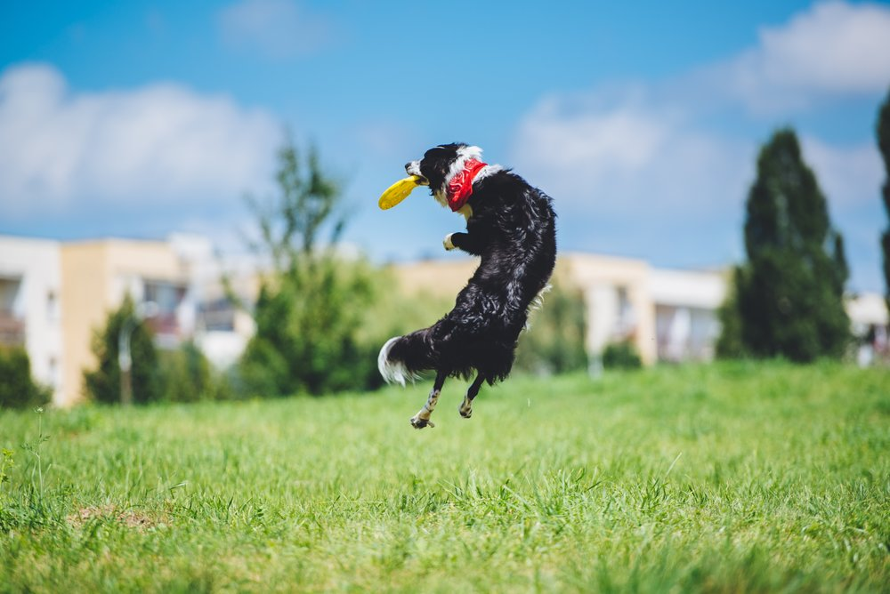 relationship-based dog training allows you to have more fun