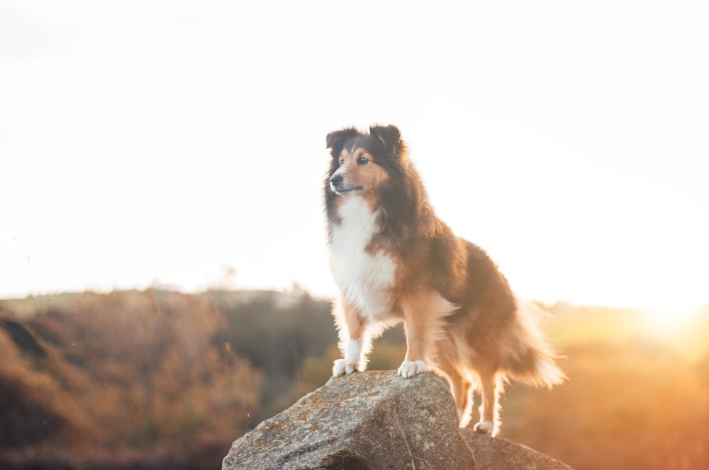 create a magical relationship with your dog