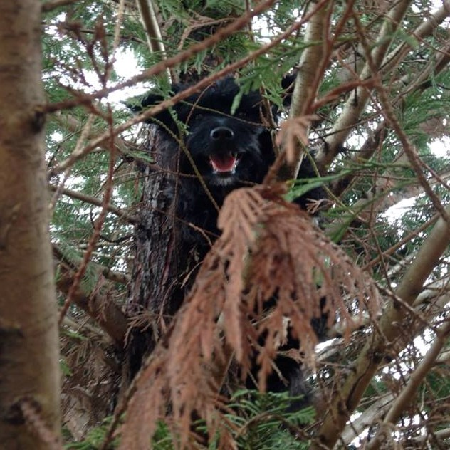 Millie in tree (2).jpg