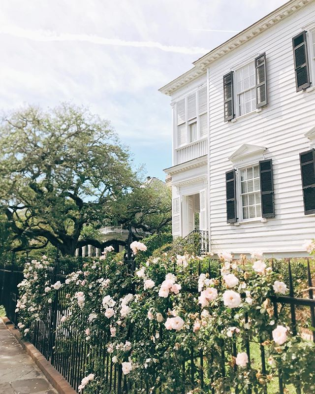 Charleston just showing off a little 🌸