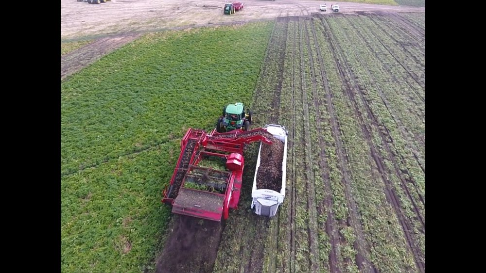 - Birds eye view of digging potatoes at OTHF