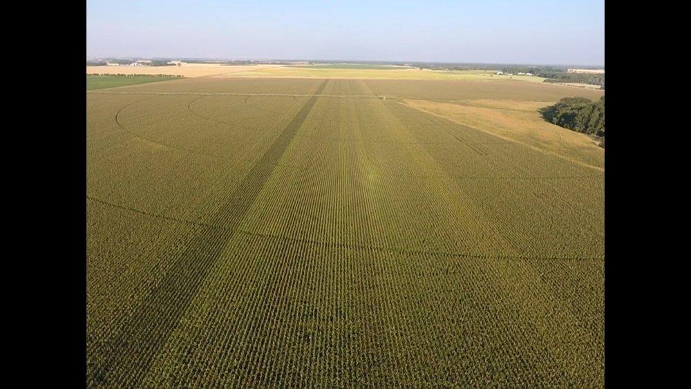 - Corn Plots at OTHF