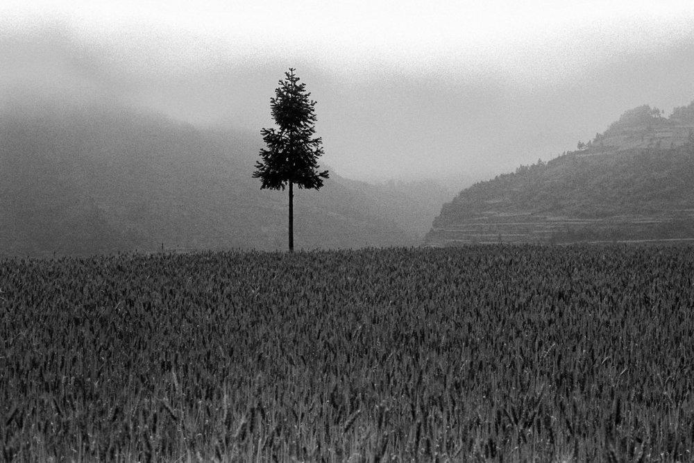 tree_in_field.jpg