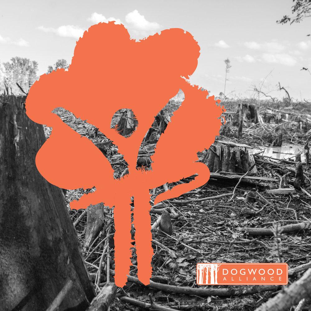 17-DWA-002_Stand4Forests_SocialMedia_v15.jpg