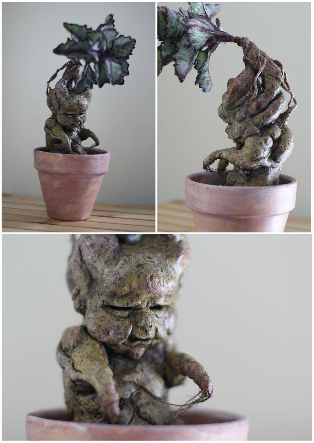 Mandrake by Anthony Lombardo