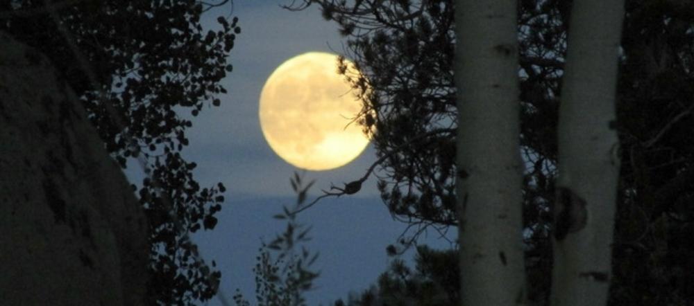 Lenahan.almost full moon eclipse 7 26 18.jpeg