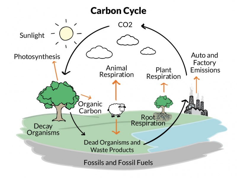 The carbon cycle is complex, and human models of it attempt to simplify it to its most important components.