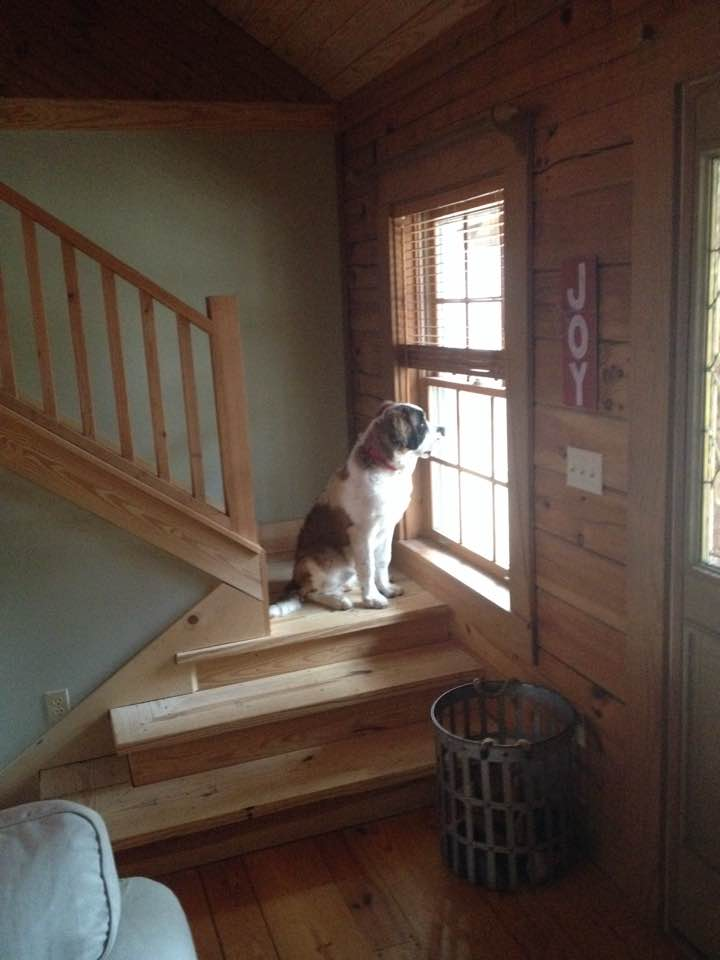 """Missy as a """"pup"""" (still huge) looking out the window. She's got to be the best behaved dog in the world."""