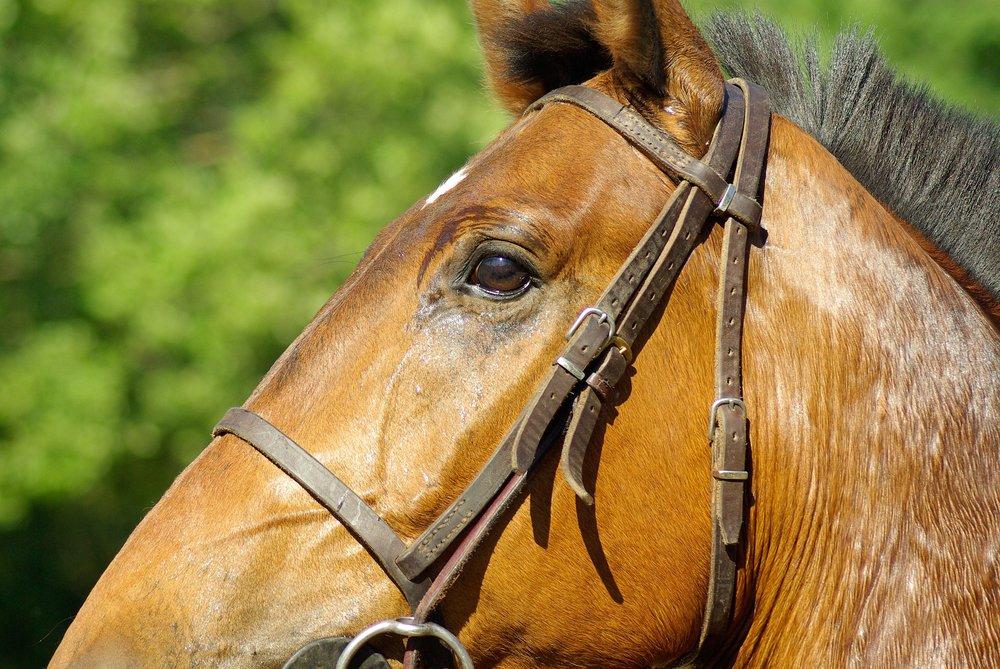 horse-800851_1920.jpg