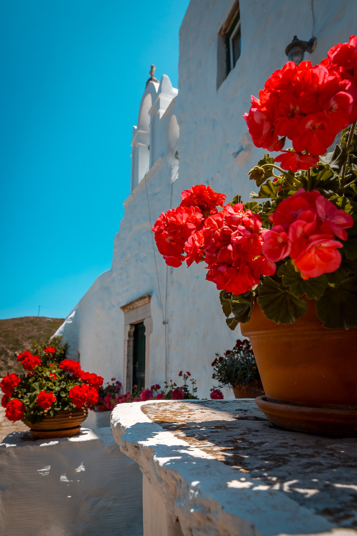 flowers-church-amorgos-stemajourneys.com.jpg
