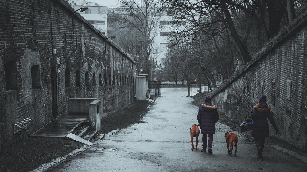 Dog-walkers in Poznan