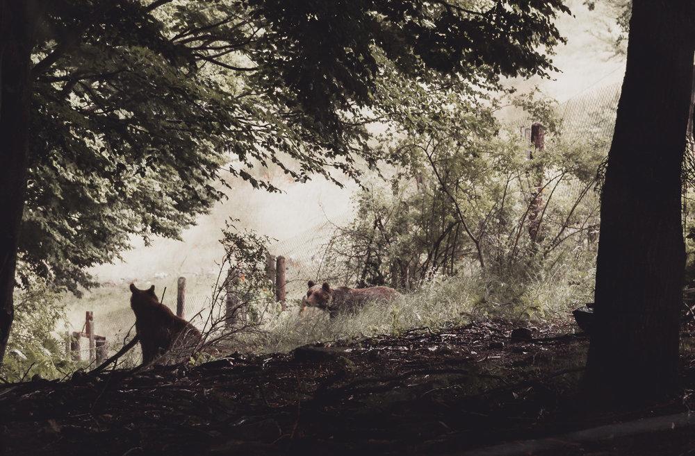 Η ομάδα του SteMajourneys ταξίδεψε στο Νυμφαίο και μίλησε με τους υπεύθυνους του Αρκτούρου για το δύσκολο έργο της προστασίας της άγριας πανίδας στην Ελλάδα.  Δες περισσότερα →