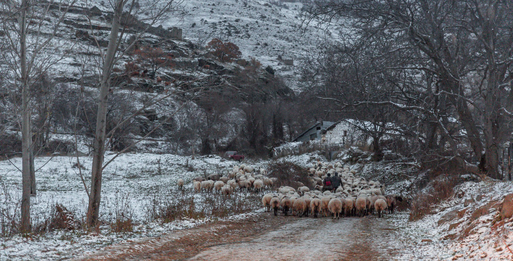 With the plains far behind, the flock will spend few hours grazing on the Mounts along the border with Albania.
