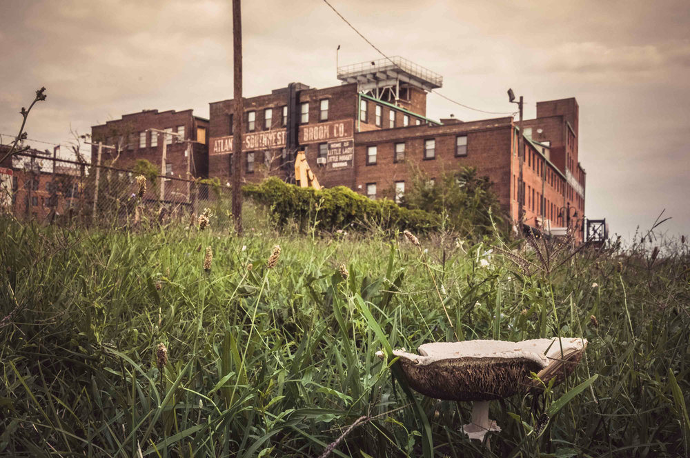 My 2016 photo of a mushroom in front of the Broom Factory building in Canton, Baltimore City.