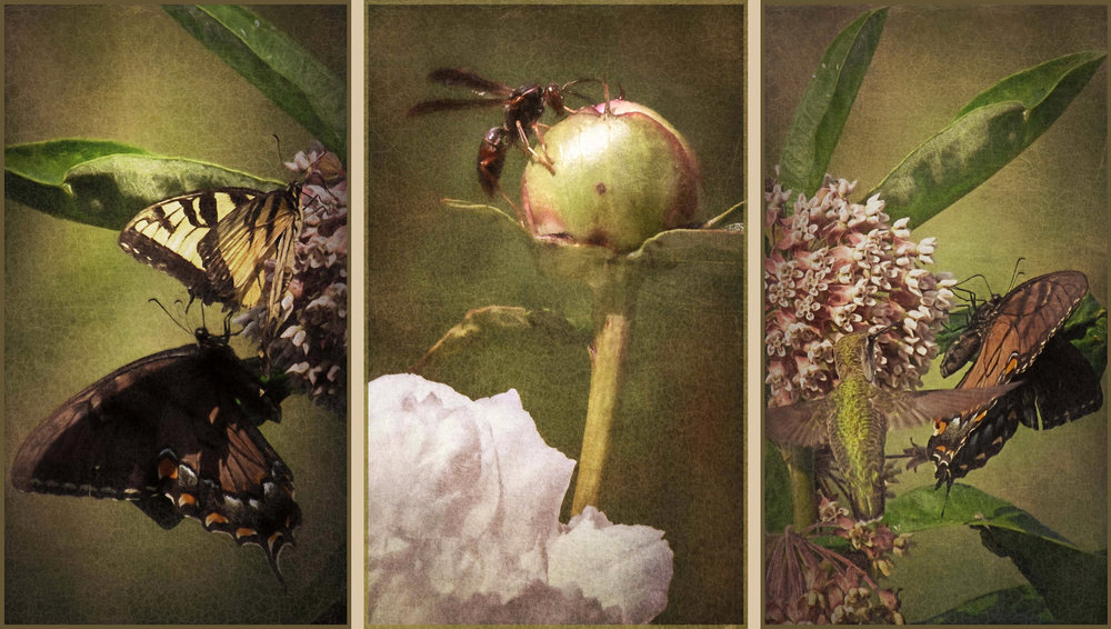 Fairies of the Fields: Triptych - Archival Pigment Print on Hahnemühle Fine Art RagThree 10