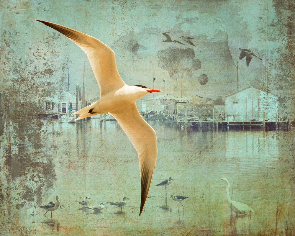 Chesapeake Bird - Archival Pigment Print on Hahnemühle Fine Art Rag25