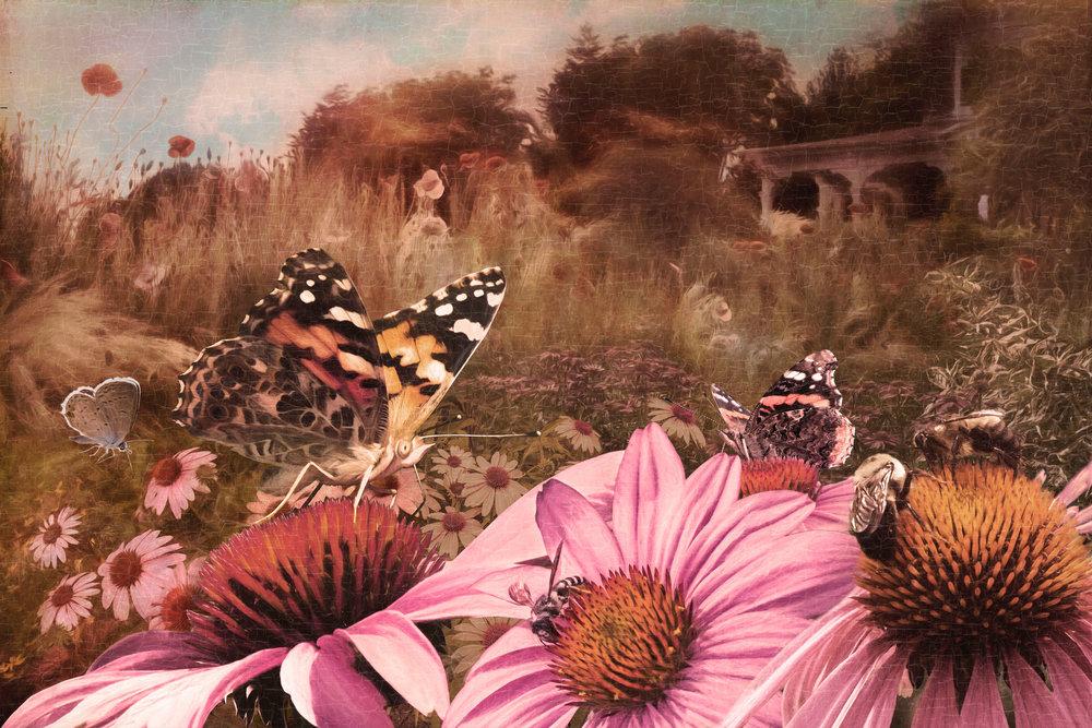 The Unkempt Garden - Archival Pigment Print on Hahnemühle Fine Art Rag18