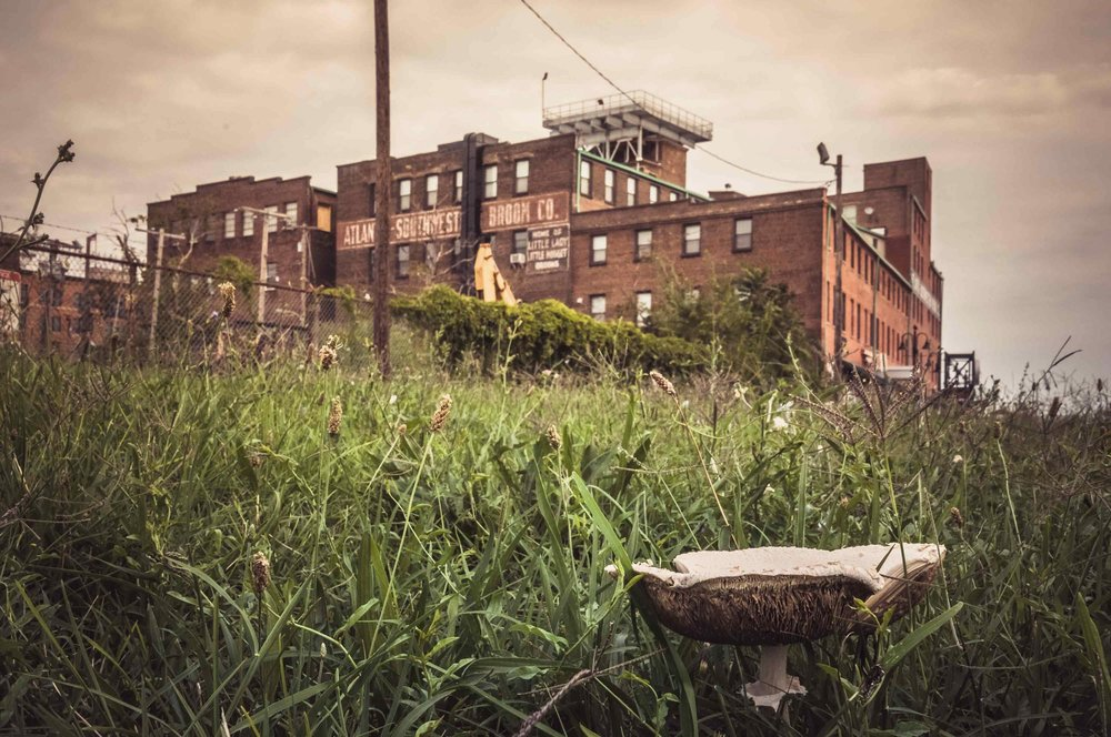 Rose Anderson, 2016 Mushroom in Baltimore City with The Broom Factory Building in the Background