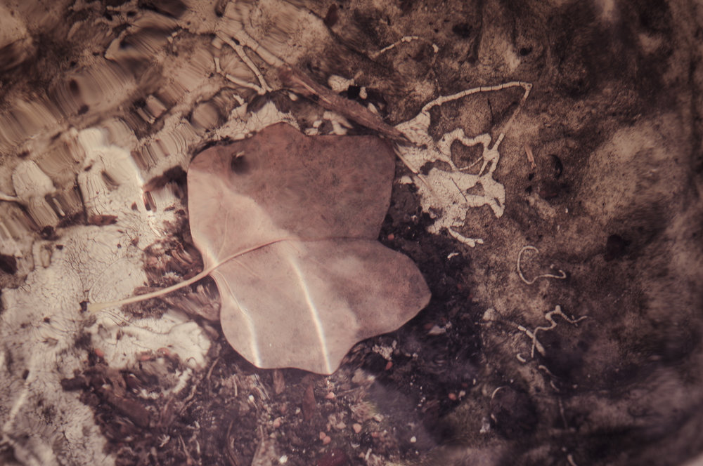 Leaf in An Old Urn at Hampton National Historic Site Photo: Rose Anderson, July 2018