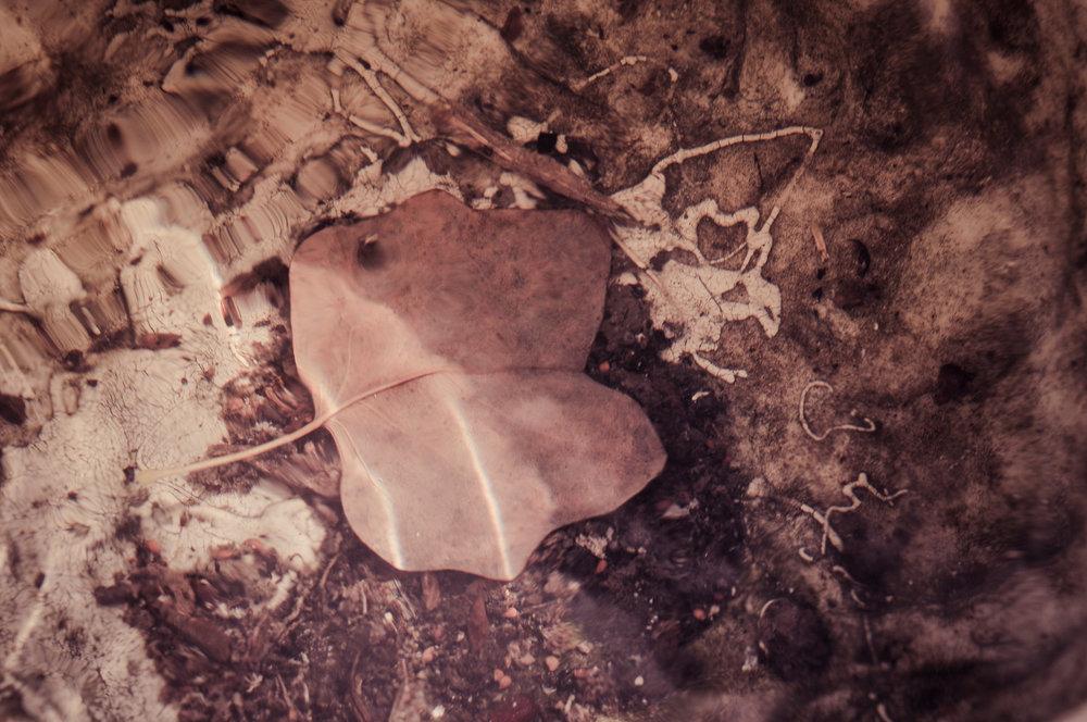 Leaf Drowned in a Slaveholder's Garden Urn Photo: Rose Anderson, 2018